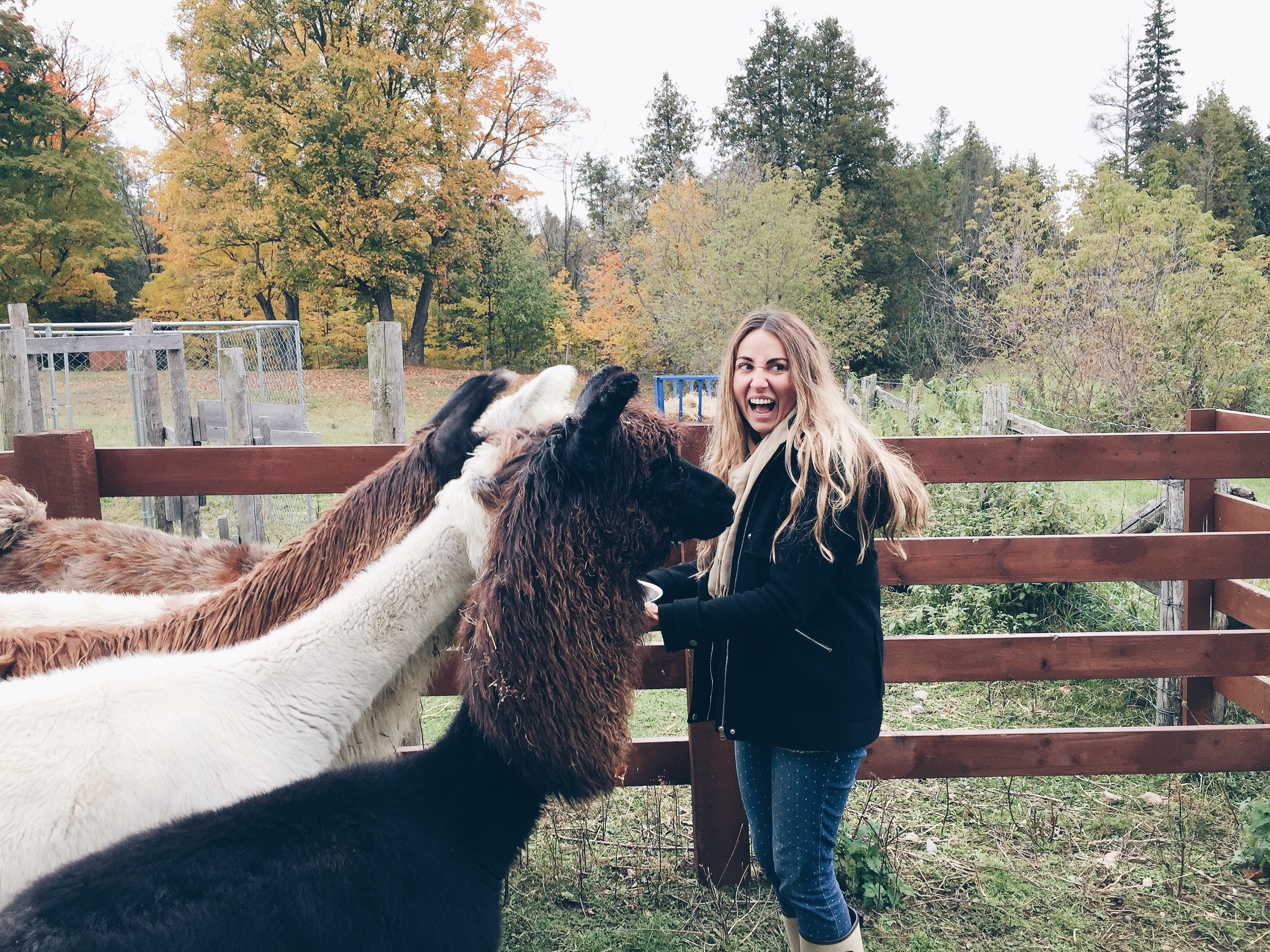 Misty Morn Llama Farm Beachburg Ontario